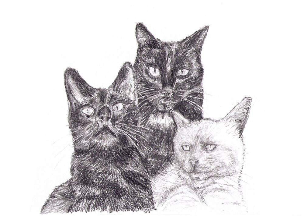 Commissioned portrait drawing of three cats un pencil