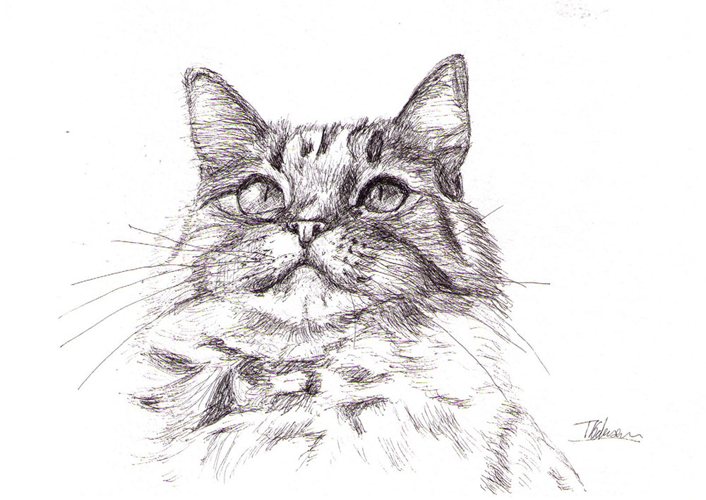Cat portrait drawing in pen