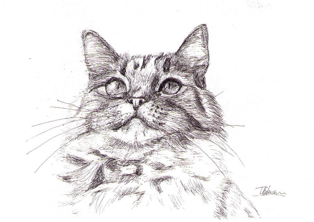 Cat portrait drawing in pen