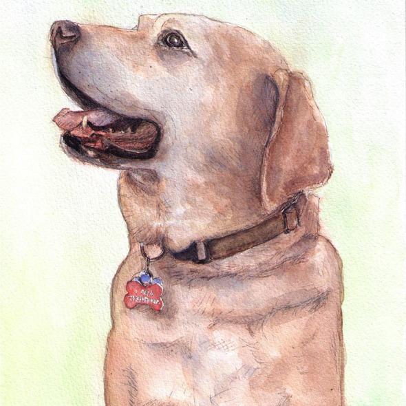 Commissioned dog portrait in watercolor and ballpoint pen