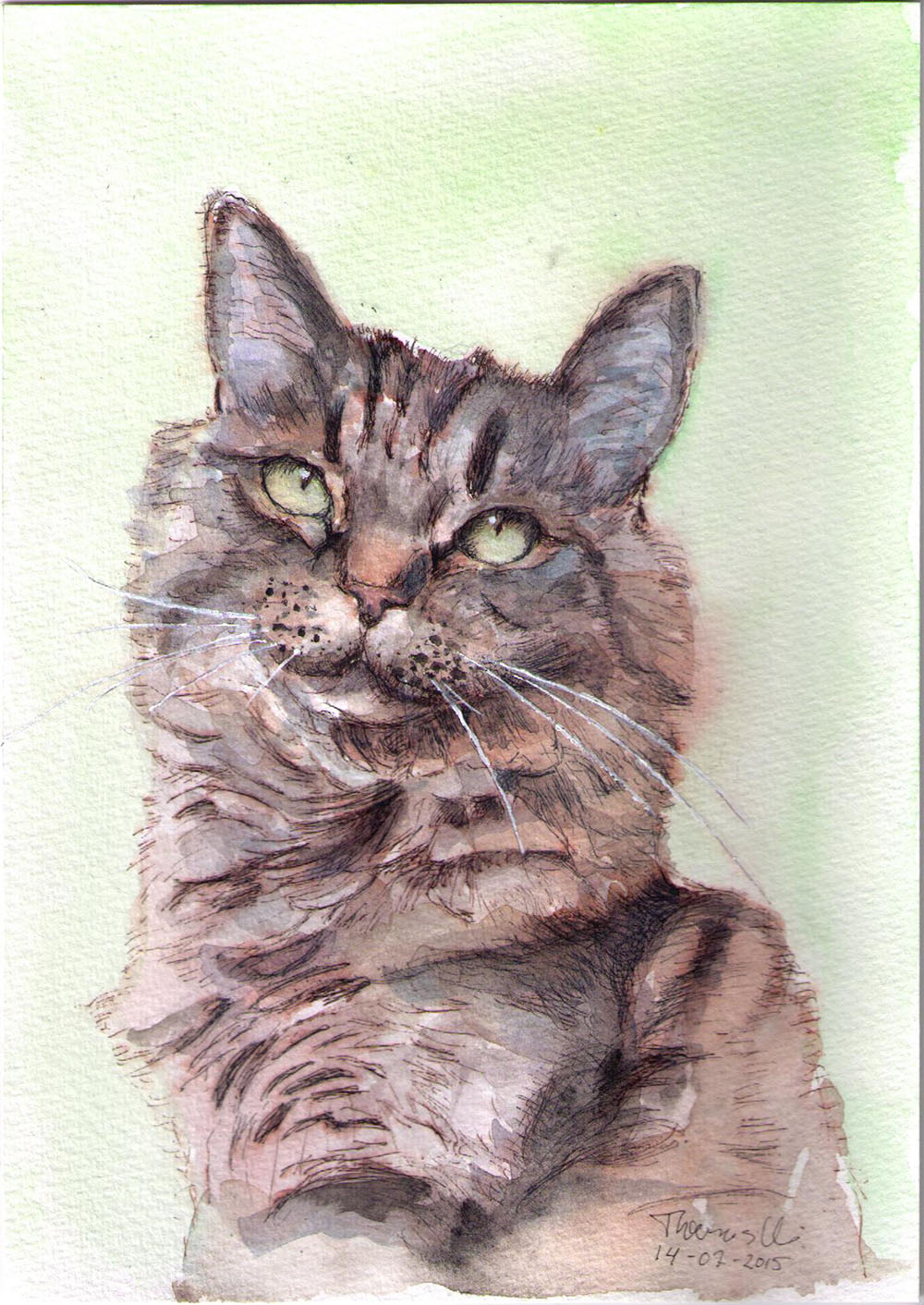 Drawing of a cat called Benji in ballpoint pen and watercolor