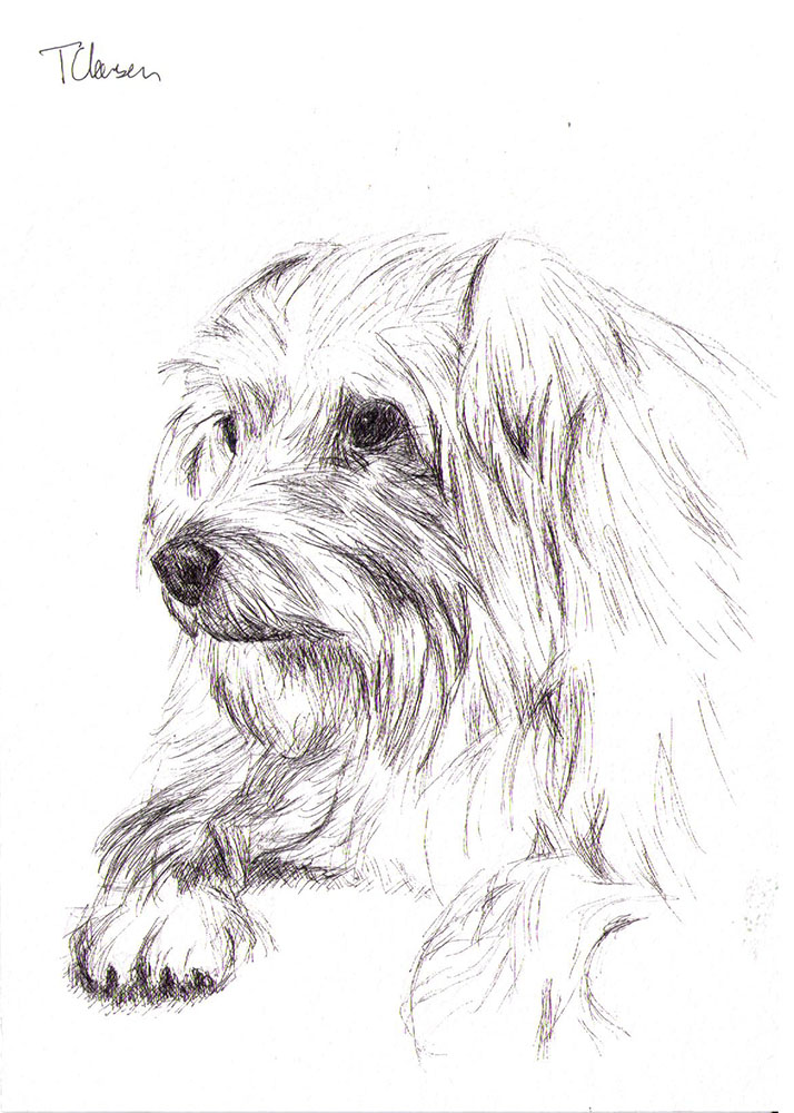 Commissioned dog portrait drawing in pen