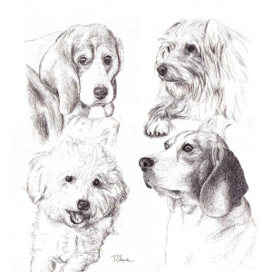 Commissioned portrait drawing of four dogs in pen