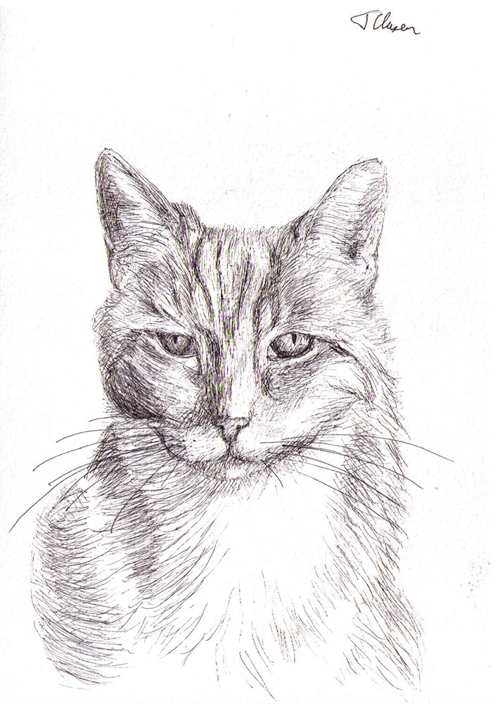 Commissioned cat portrait drawing in pen