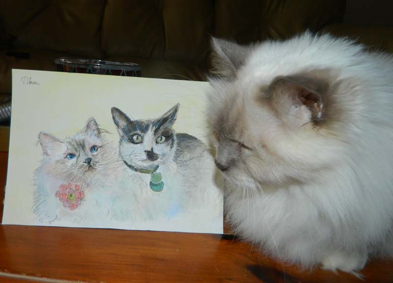 Allie the cat with her portrait