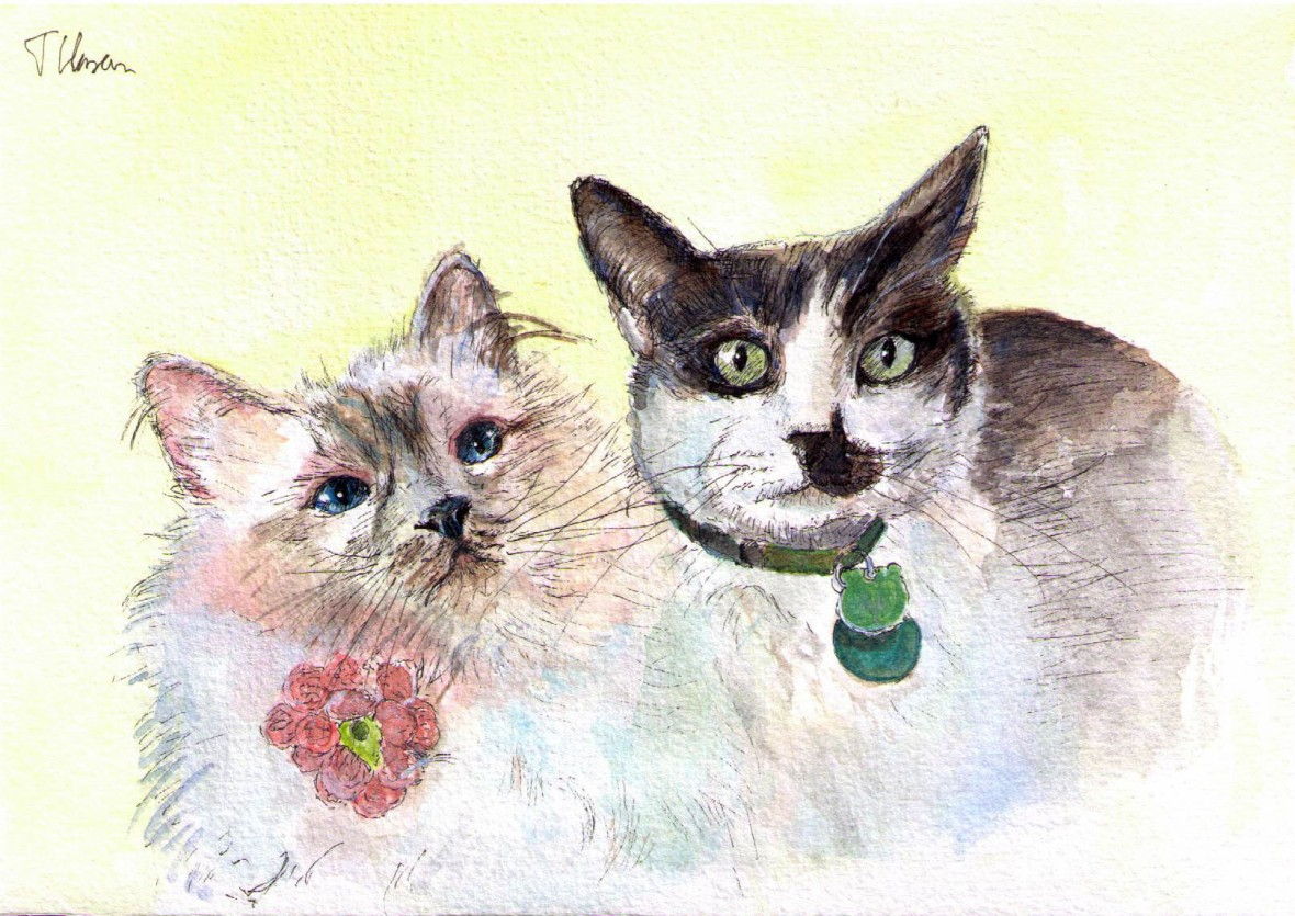 Portrait of two cats called Mauricio and Allie in pen and watercolor