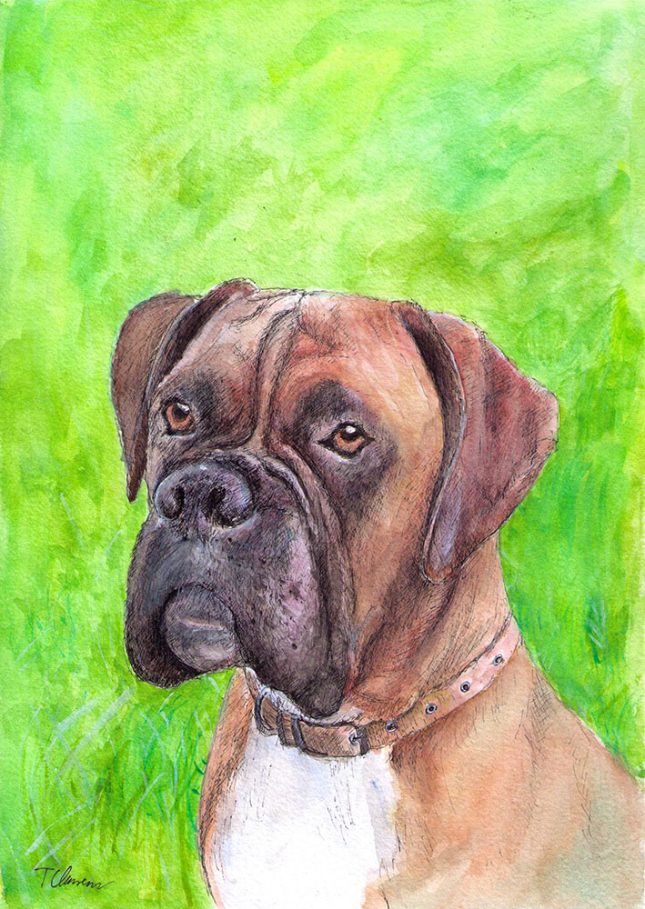 A custom pet portrait of a boxer dog called Henry in pen and watercolor