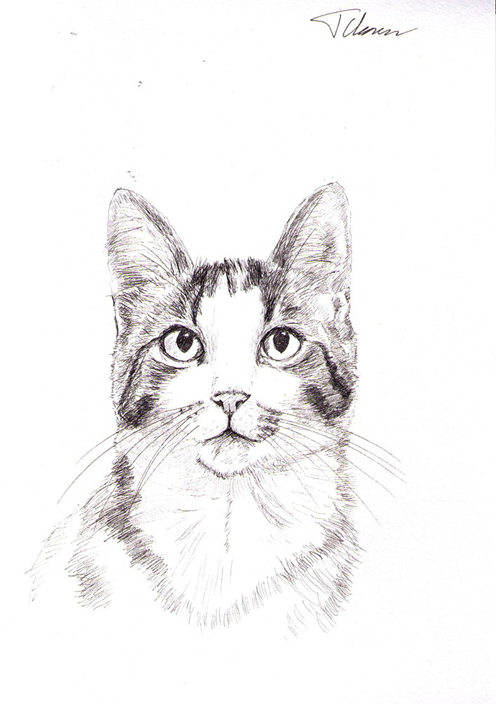 Custom portrait of Azura the cat in pen
