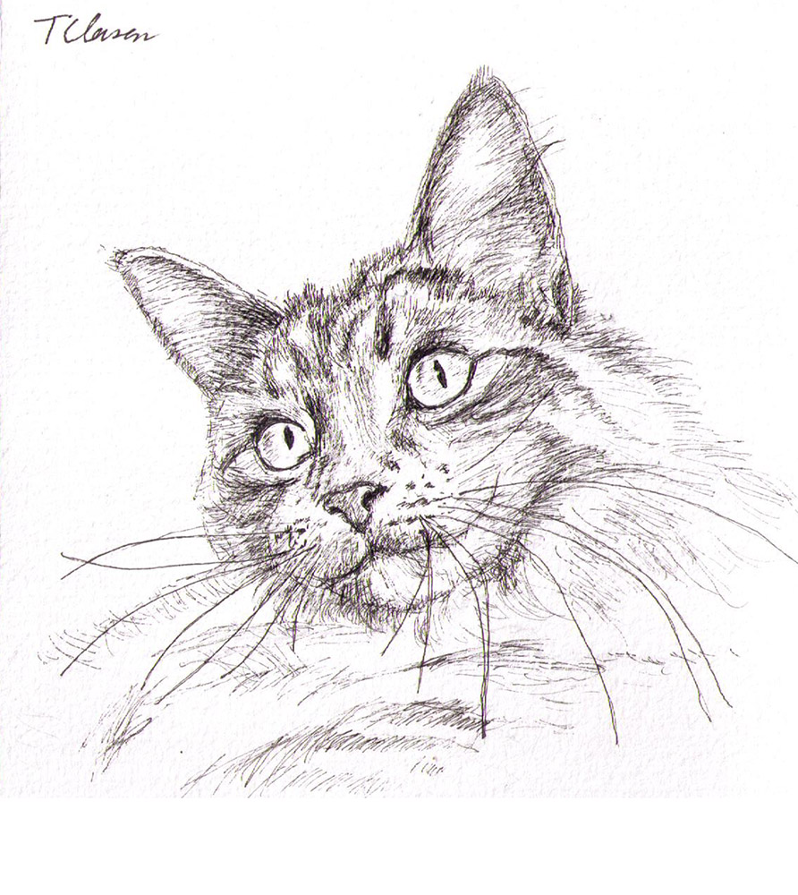 cat-portrait-drawing-pen-mia-furkid-thomas-clausen
